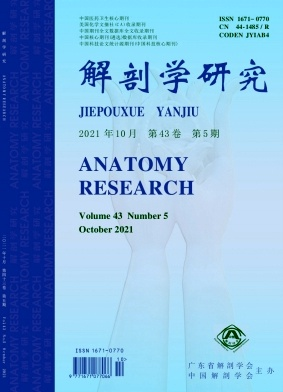解剖学研究